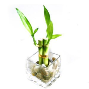 love-couple gift a plant